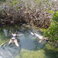 mangrove snorkel